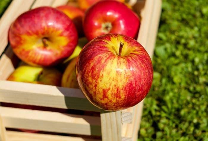 10 τροφές για να εξαφανίσετε το πρήξιμο (2)
